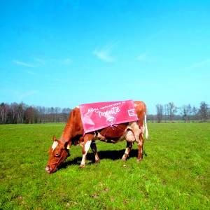 Beter bereik Wi-Fi door koeien
