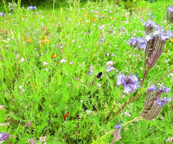 Gratis bloemenzaad voor bloemenlint